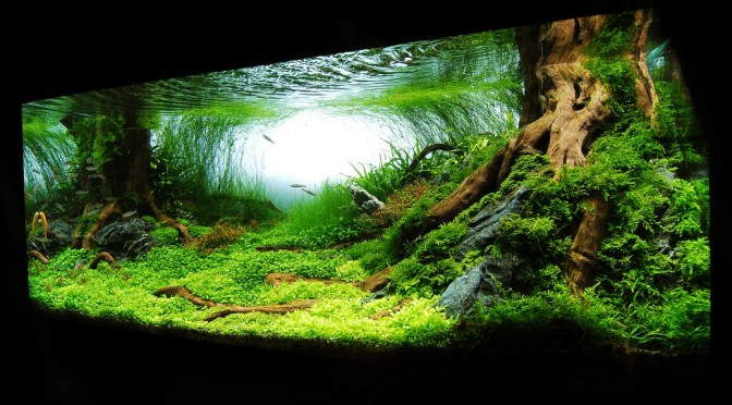 O Estilo Nature Aquarium